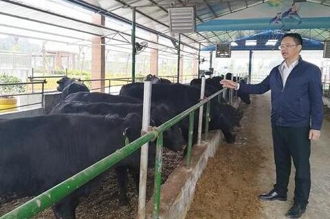清华博士携93项专利养牛 立志打造自己的牛肉品牌
