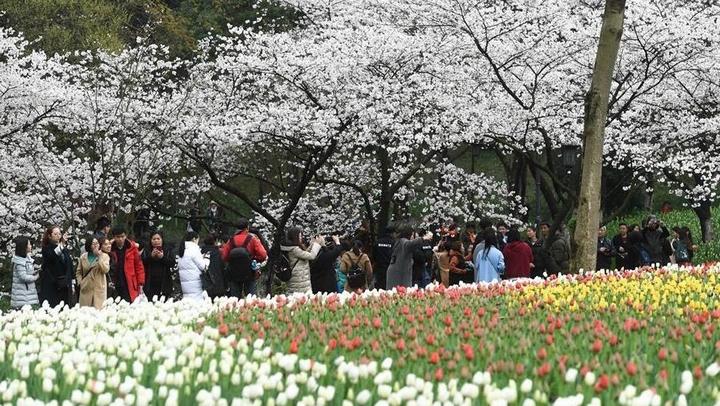 西子湖畔 鲜花烂漫