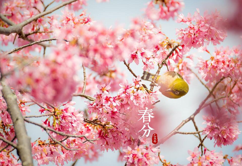 春分养生:跟着太阳早睡早起 多食用时令蔬菜