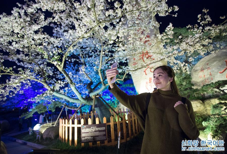 우한 : 화려한 벚꽃 관광객 매료시켜<br/>