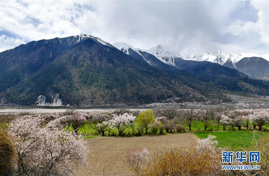 <br/>   这是山脚下的桃花林景色(3月31日摄)。<br/>