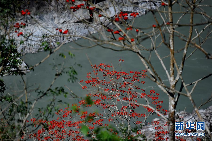 <br/>   墨脱县境内的植被(4月2日摄)。<br/>