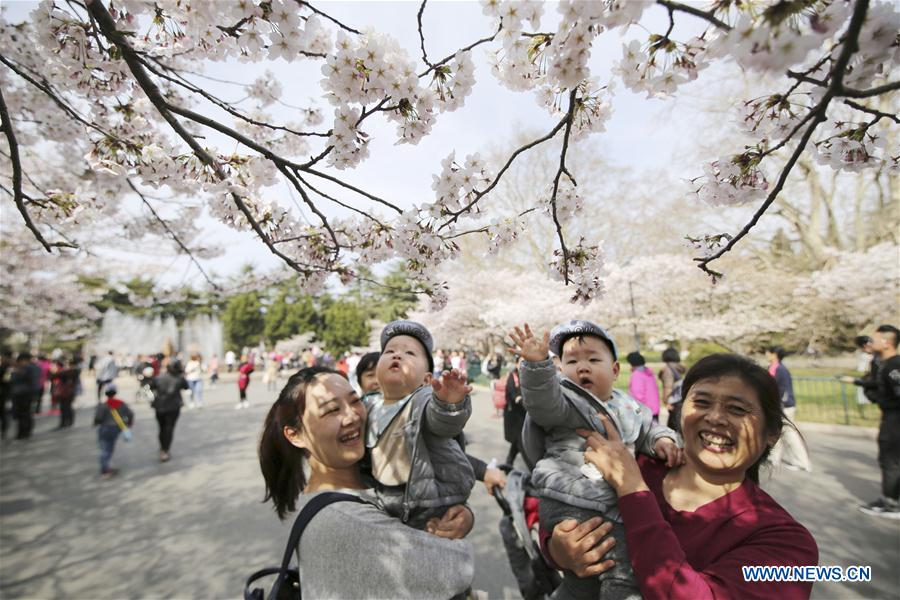 <br/>People enjoy the view of cherry blossoms at Zhongshan Park in Qingdao, east China's Shandong Province, April 11, 2018. (Xinhua/Huang Jiexian)<br/>