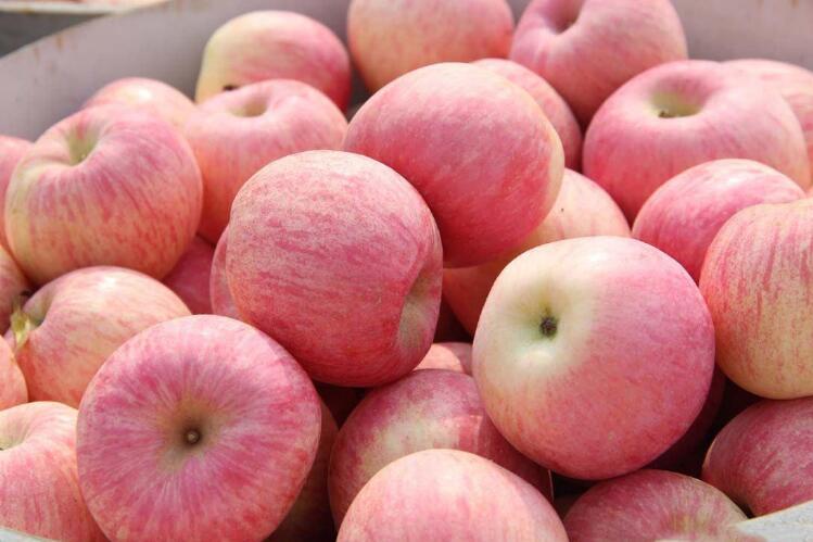 吃苹果该不该削皮?苹果皮还真有必要削一削