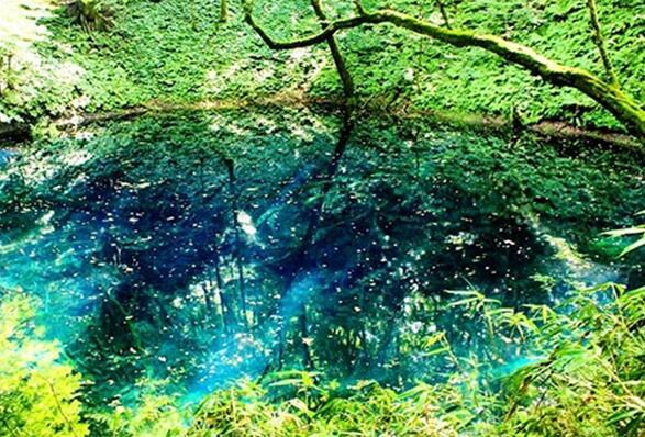 日本青森县的白神山地