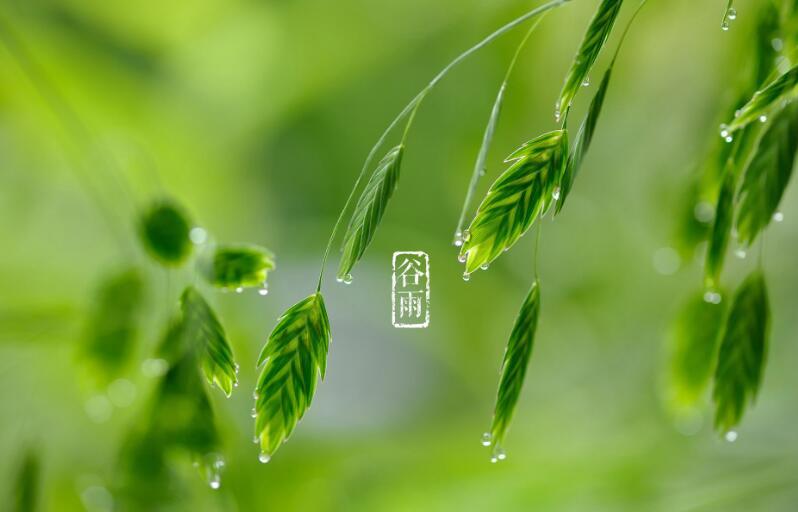 防春火、祛湿热、避过敏!谷雨养生攻略看这里