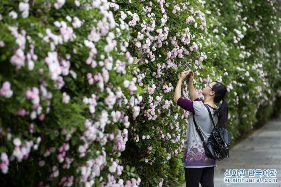 꽃들의 향연<br/>