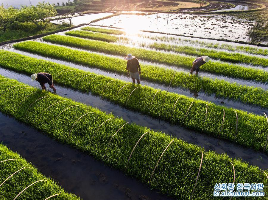 '소만' 바쁜 농사철 풍경