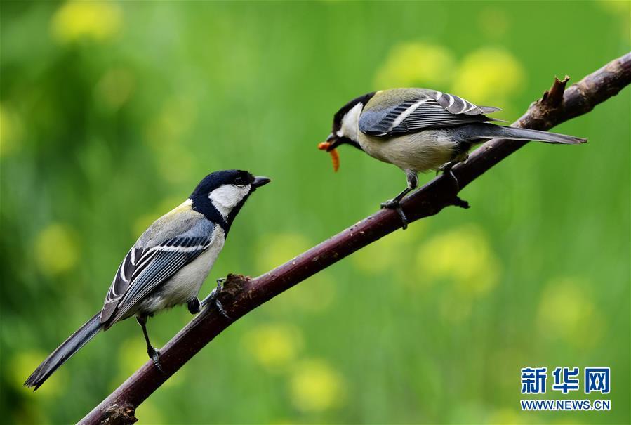 <br/>  初夏时节,生机勃勃,羽毛亮丽的鸟儿在青山绿水间觅食,山青、水秀、鸟飞构成了生动的生态图景。<br/>
