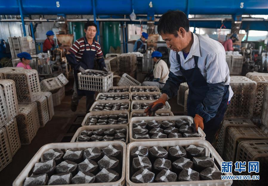 왕청현 천교령진 농민들이 현지의 식용균공장에서 목이 버섯 접종작업을 진행하고 있다.