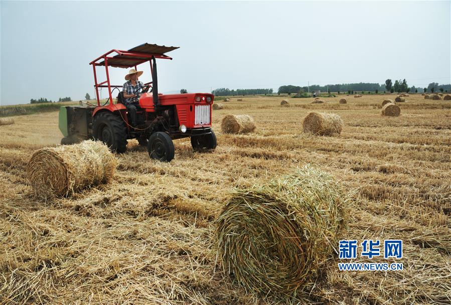 5月29日,工作人员驾驶小麦秸秆打捆机在山东枣庄山亭区王庙村麦田作业。