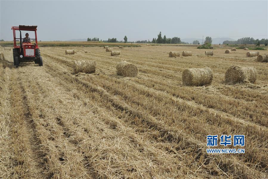 <br/>  麦收时节,山东省枣庄市山亭区大力推广小麦秸秆回收技术,将回收秸秆用于农业种植养殖、生物质发电等领域,有效提高秸秆综合利用率。<br/>
