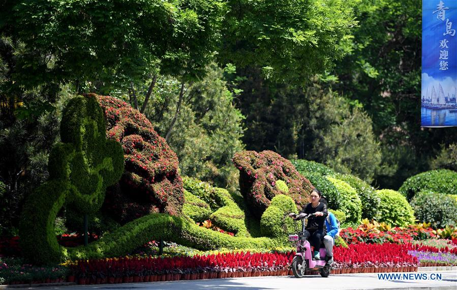 A citizen rides past a flower installation in Qingdao, east China's Shandong Province, June 3, 2018. The 18th Shanghai Cooperation Organization (SCO) Summit is scheduled for June 9 to 10 in Qingdao. (Xinhua/Liu Junxi)<br/>