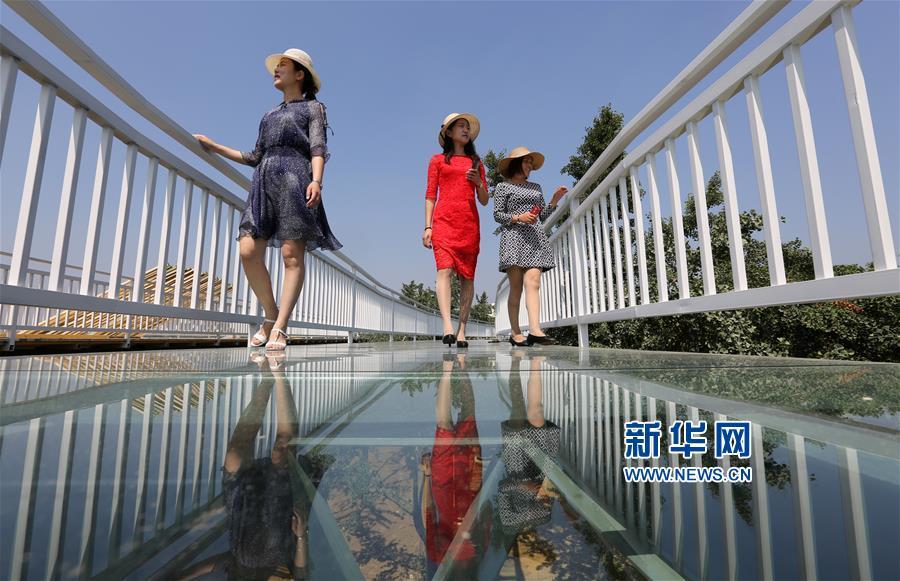 6月6日,在山东省临沂市郯城县重坊镇中华银杏园景区,人们在玻璃桥上游玩。
