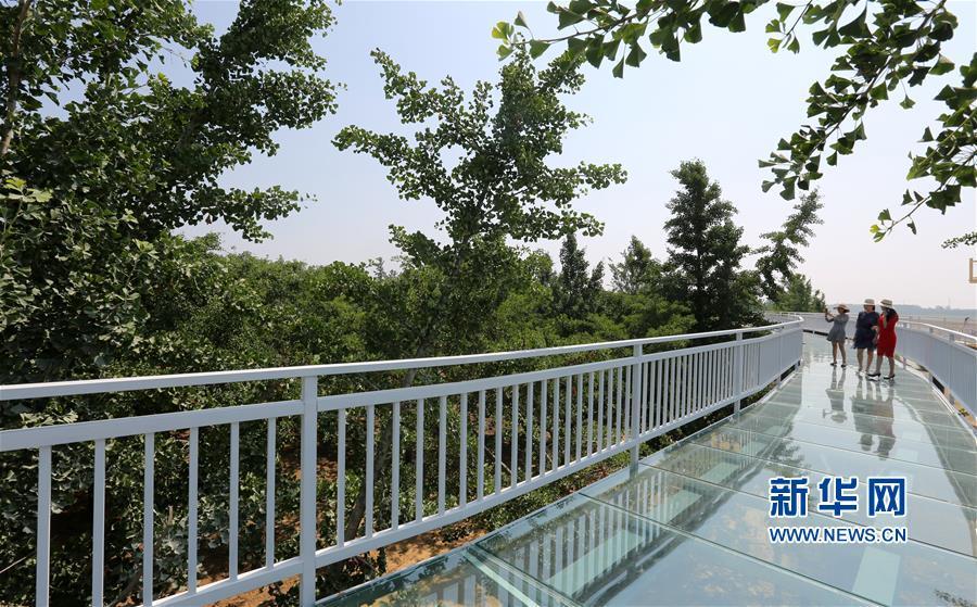 <br/>  6月6日,在山东省临沂市郯城县重坊镇中华银杏园景区,人们在玻璃桥上游玩。<br/>