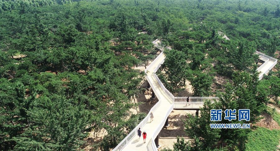 景区内的玻璃桥、木栈道和银杏树差不多高,游客行走其上犹如在&amp;ldquo;树梢&amp;rdquo;间漫步。<br/>