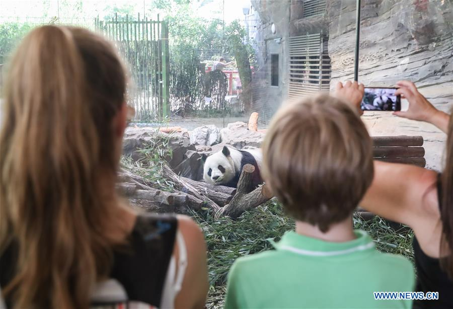 Guests visit giant panda Jiaoqing at Berlin Zoo in Berlin, Germany, June 9, 2018. Mengmeng and Jiaoqing, the two pandas from China, arrived in Berlin on June 24, 2017. They became superstar during their first-year's stay here in Berlin Zoo. (Xinhua/Shan Yuqi)<br/>