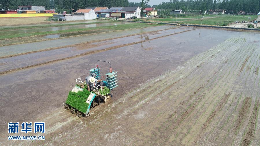 6月24日,沂南县黑土湖农机化服务专业合作社的工人驾驶插秧机在田间劳作(无人机拍摄)。<br/>
