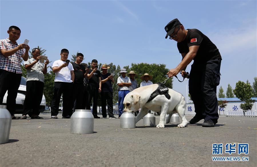 """6月24日,在山东省沂南县公安局举办的""""缉毒犬开放日""""活动上,一只缉毒犬进行嗅毒表演。"""