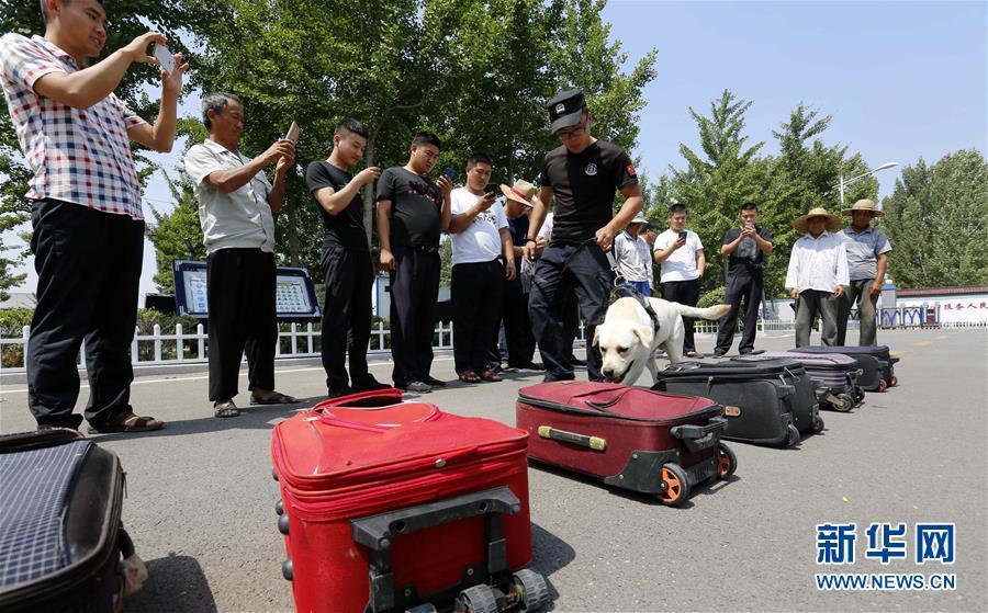 6月24日,在山东省沂南县公安局举办的&amp;ldquo;缉毒犬开放日&amp;rdquo;活动上,一只缉毒犬进行箱包藏毒查缉表演。<br/>