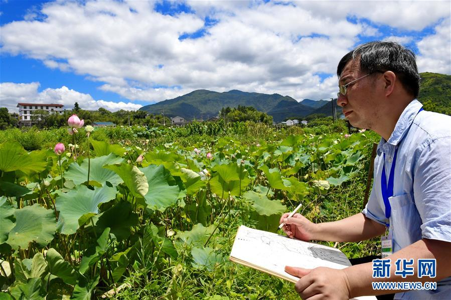 <br/>   7月19日,游客在武夷山市五夫镇&amp;ldquo;清风荷塘&amp;rdquo;主题公园写生。