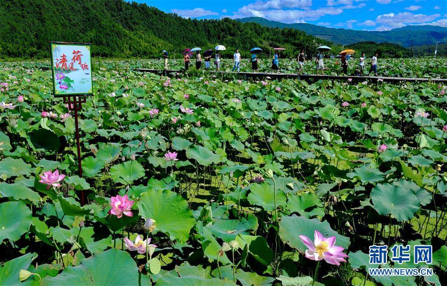 7月19日,游客在武夷山市五夫镇&amp;ldquo;清风荷塘&amp;rdquo;主题公园游览。 近年来,福建省武夷山市五夫镇把发展特色种植和传统文化结合起来,通过大面积种植荷花,打造&amp;ldquo;清风荷塘&amp;rdquo;主题公园,促进了乡村旅游的发展。<br/>