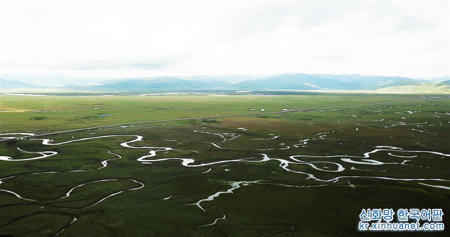 간쑤 마취: 한여름 고원 습지의 아름다움<br/>