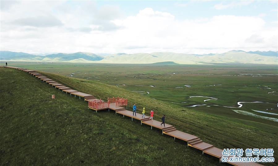 간쑤 마취: 한여름 고원 습지의 아름다움