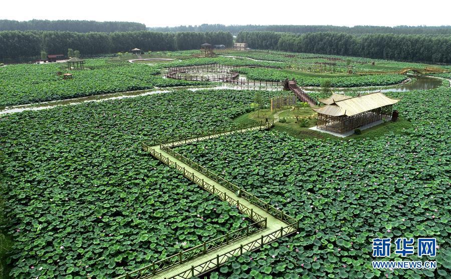 <br/>   8月9日无人机拍摄的河北香河县刘宋镇庆功台村的万亩荷塘景区。<br/>