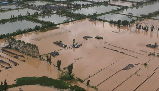 科比特与鼎湖区政府携手抗击超强台风