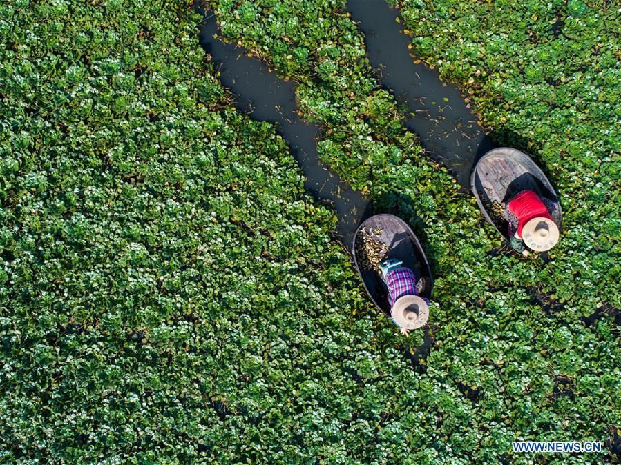 Aerial photo taken on Sept. 19, 2018 shows local villagers collecting water caltrops in Dongnan Village of Donglin Township in Huzhou, east China's Zhejiang Province. The water caltrops of Donglin Township are in their harvest season. (Xinhua/Xu Yu)<br/>