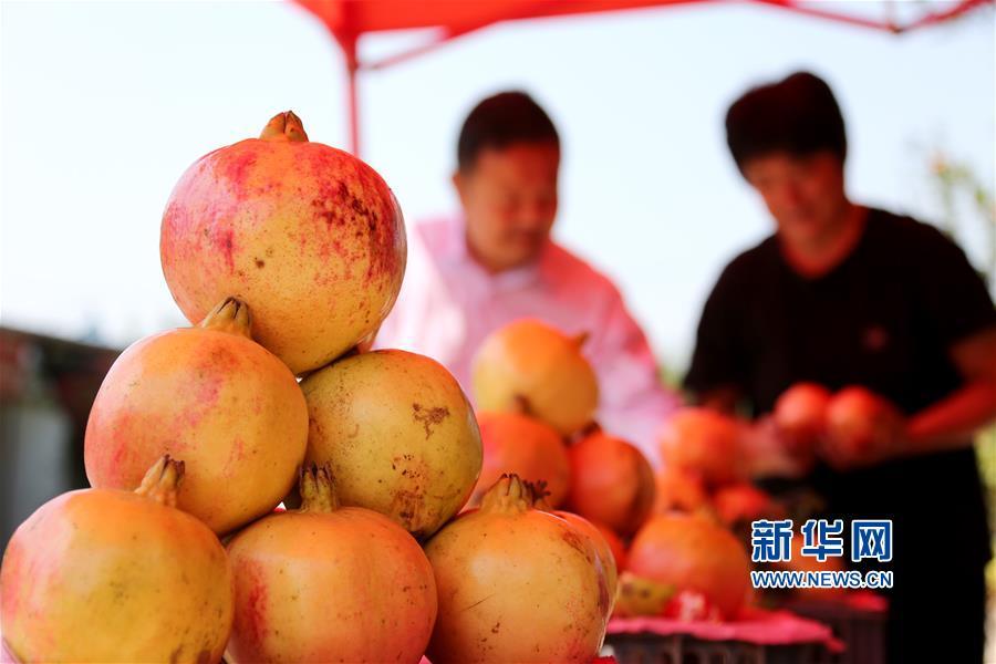 9月24日,游客在山东省枣庄市峄城石榴园选购石榴。<br/>