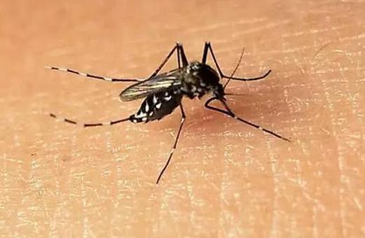 """""""基因剪刀""""可消灭蚊子"""