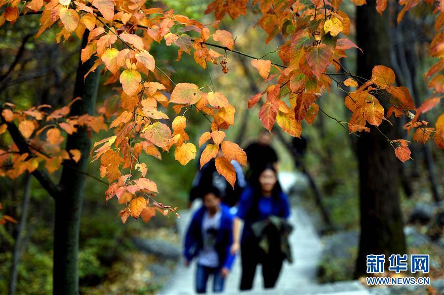10월 6일, 관광객이 타이항산(太行山) 동쪽 기슭에 위치한 링서우(靈壽)현 우웨짜이(五嶽寨) 자연풍경구에서 유람하고 있다. 국경절연휴 기간, 허베이(河北)성 스자좡(石家莊)시 링서우현 관내에 위치한 타이항산맥은 가을빛이 완연했다. 현란한 색채의 나뭇잎으로 유난히 아름답게 장식된 타이항산은 많은 관광객의 발길을 끌었다.<br/>