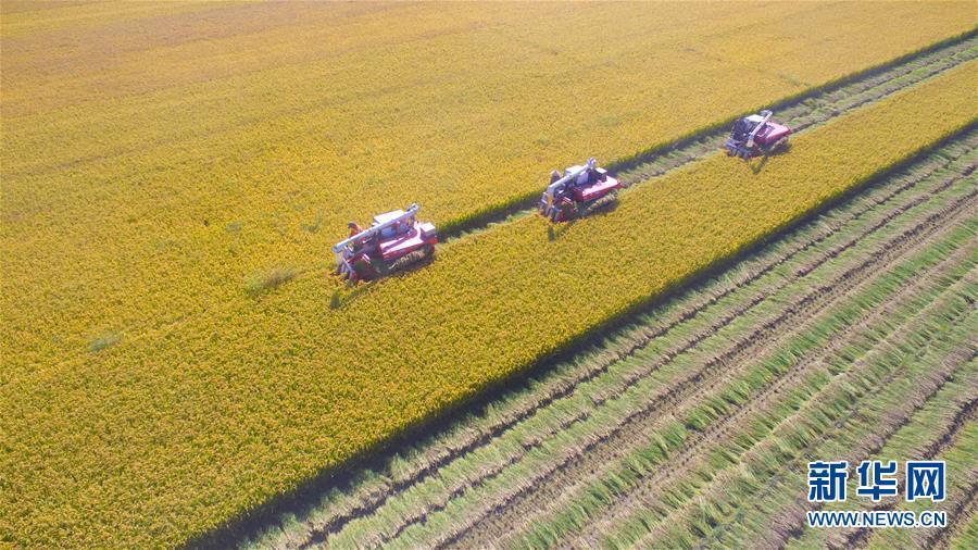 据了解,当地农民将土地作为股份加入合作社,由合作社统一管理经营,农民除每月可获得固定的酬劳外,年底根据收益还可分得红利。<br/>