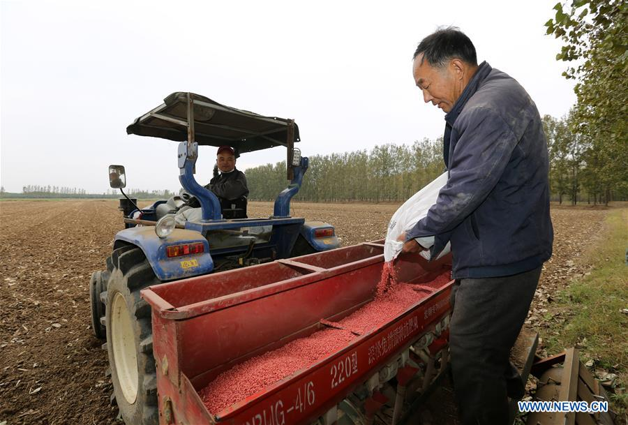 Farmer Wang Huiyi (R) loads seeds into the seeding machine in Tancheng County of Linyi, east China's Shandong Province, Oct. 14, 2018. As autumn arrives, farmers of family farms begin to sow wheat seeds in Shandong. (Xinhua/Zhang Chunlei)