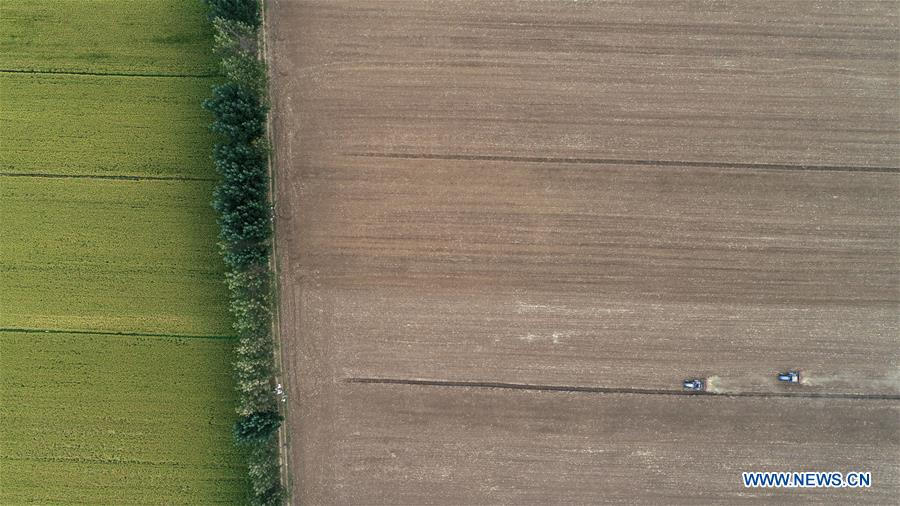 Aerial photo shows farmers driving seeding machines to sow seeds in a wheat field in Tancheng County of Linyi, east China's Shandong Province, Oct. 14, 2018. As autumn arrives, farmers of family farms begin to sow wheat seeds in Shandong. (Xinhua/Zhang Chunlei)<br/>