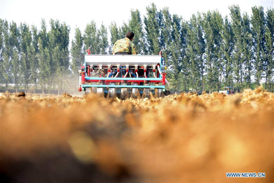 <br/>A farmer drives a seeding machine to sow seeds in a wheat field in Chiping County of Liaocheng, east China's Shandong Province, Oct. 14, 2018. As autumn arrives, farmers of family farms begin to sow wheat seeds in Shandong. (Xinhua/Zhao Yuguo)<br/>