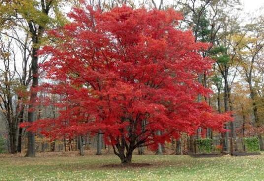 日本秋日何处最适合观赏枫叶?这个地方击败了京都