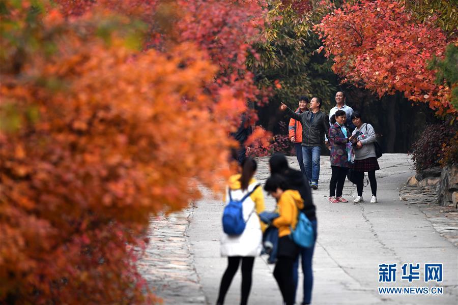 10月25日,游客沿着山路观赏红叶。 金秋十月,北京西山八大处公园的山间、路边层林尽染,秋色正浓。<br/>