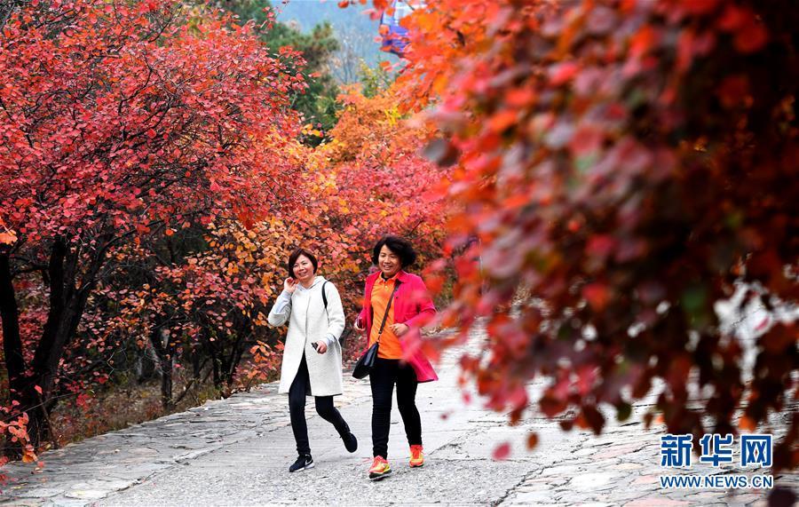 <br/>   10月25日,游客在山路上观赏红叶。