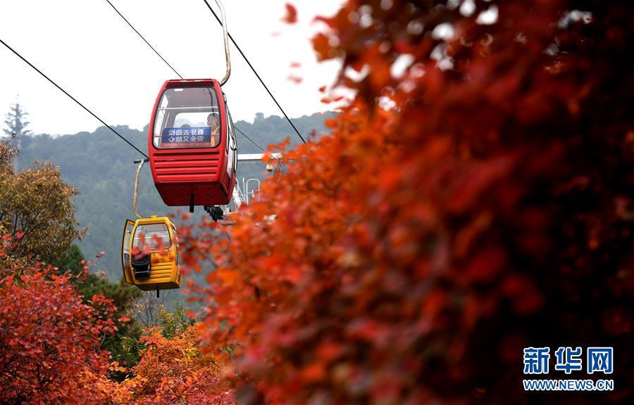 <br/>   10月25日,游客乘坐缆车观赏红叶。<br/>