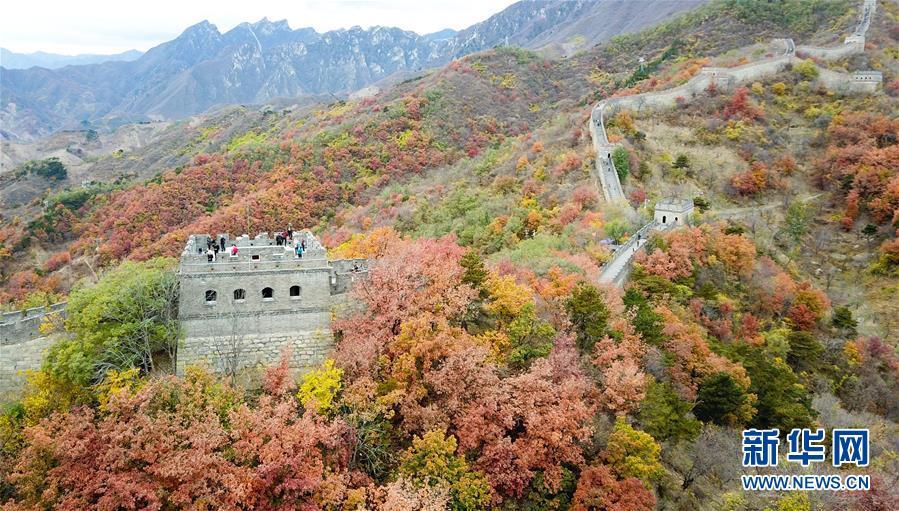 10月28日拍摄的慕田峪长城秋景(无人机拍摄)。金秋时节,北京慕田峪长城层林尽染,壮观迷人,吸引不少游客前来游览。<br/>