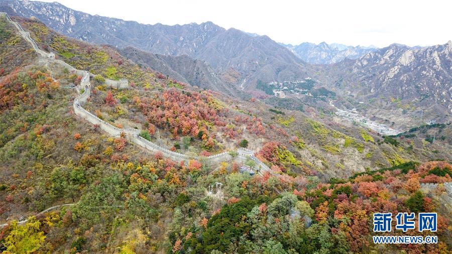 <br/>   10月28日拍摄的慕田峪长城秋景(无人机拍摄)。<br/>