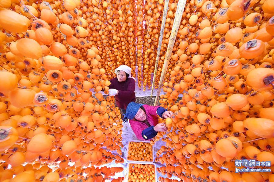 秋が深まった中国山東省淄博(しはく)市沂源(ぎげん)県ではこのところ、干し柿づくりが盛んに行われている。柿の加工は現地の農家にとって秋の増収を後押しする特色ある産業となっている。<br/>
