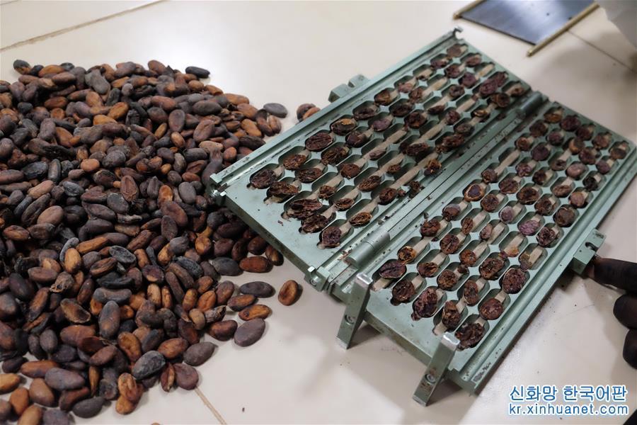 가나 코코아산업, 수입박람회 통해 '가나제조' 추동할 것을 기대