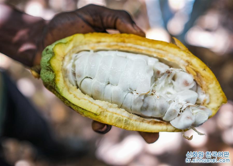가나 코코아산업, 수입박람회 통해 &amp;lsquo;가나제조&amp;rsquo; 추동할 것을 기대<br/>