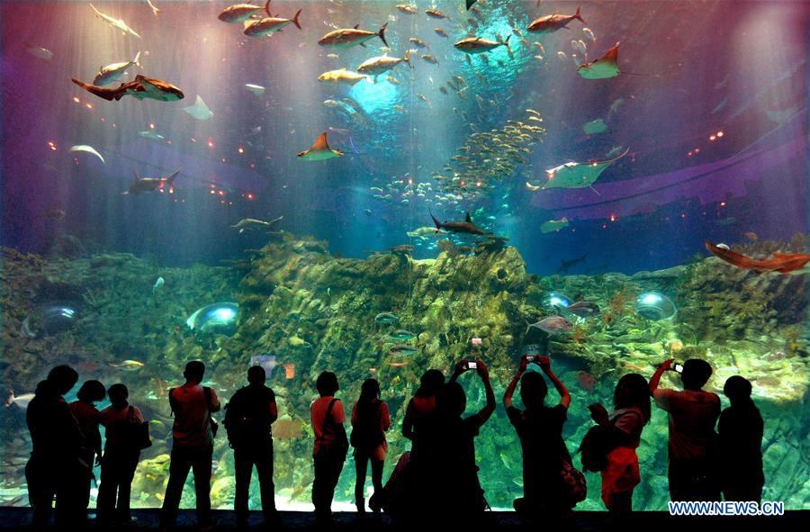 Tourists watch fish in the Ocean Park in Hong Kong, south China, May 29, 2012. China is slated to become world's largest theme park market by 2020, when the number of tourists is expected to exceed 230 million, according to a fresh report by U.S. engineering firm AECOM. The number of tourists to Chinese theme parks have seen an average annual growth of 13 percent in the past decade, and reached 190 million in 2017. The number is expected to keep the double digit growth in the following years, according to the report. The report attributes the rapid growth to Chinese consumers' rising income that sparks greater demands on leisure activities, as well as more convenient public transportation systems. (Xinhua/Chen Xiaowei)<br/>