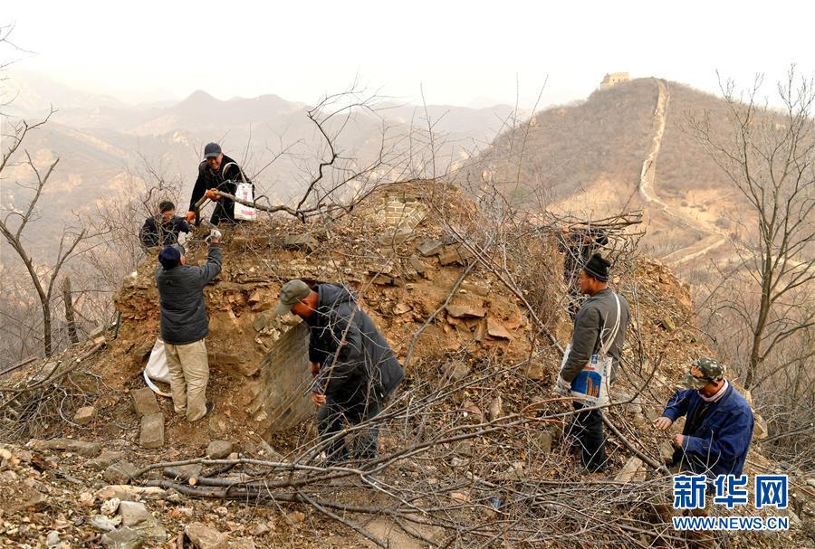 <br/>   11月27日,延庆区大庄科乡香屯村村民在清理古长城上的杂草和树木。<br/>
