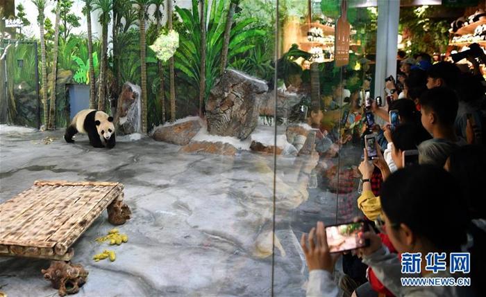 11월 25일 하이난(海南) 열대야생동식물원 판다관, 관광객들이 판다 &lsquo;순순(舜舜)&rsquo;을 바라보고 있다. [촬영/신화사 궈청(郭程) 기자]<br/>